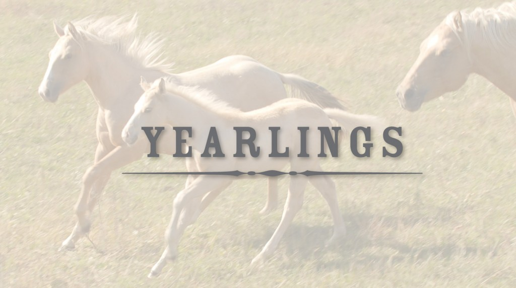 Yearlings available