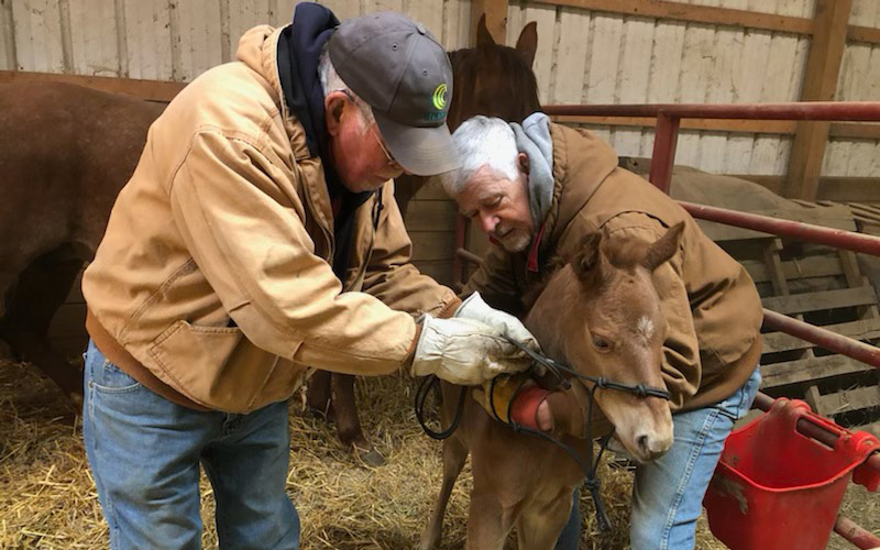 Larry Plate and Rueben imprinting a colt